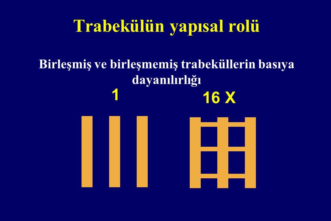 Trabekülün yapısal rolü Birleşmiş ve birleşmemiş trabeküllerin basıya dayanılırlığı