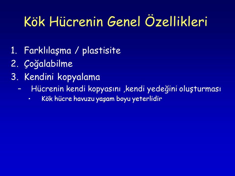 Kök Hücrenin Genel Özellikleri