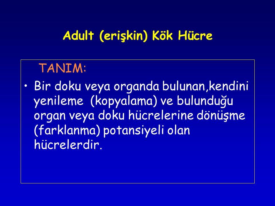 Adult (erişkin) Kök Hücre