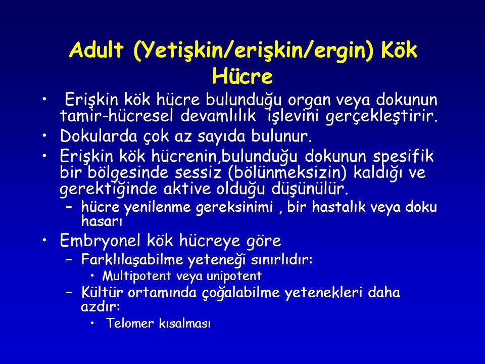 Adult (Yetişkin/erişkin/ergin) Kök Hücre
