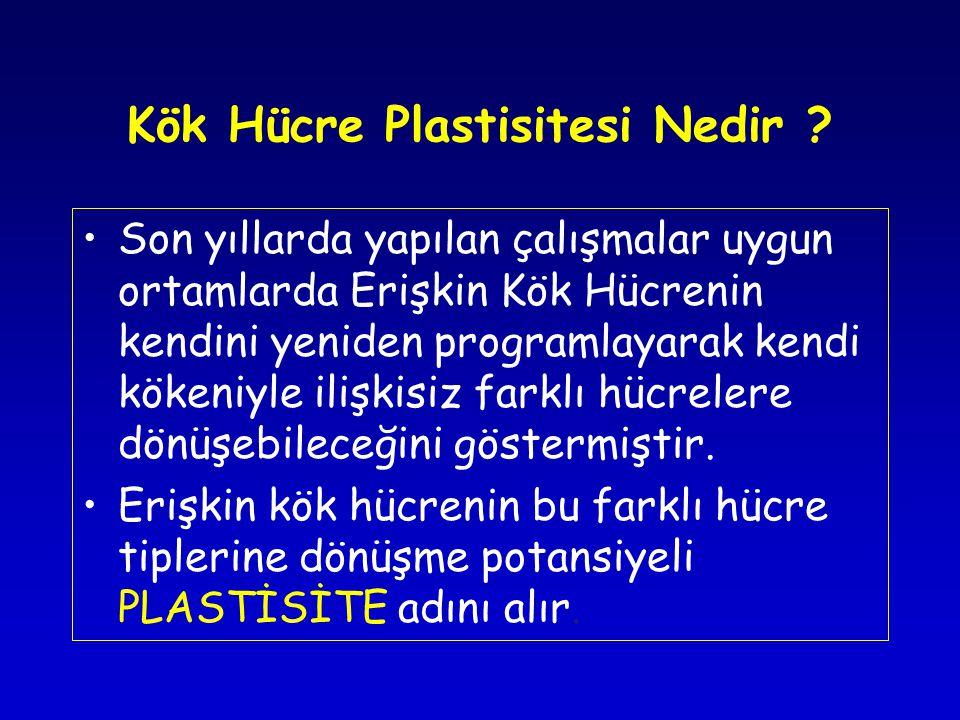 Kök Hücre Plastisitesi Nedir