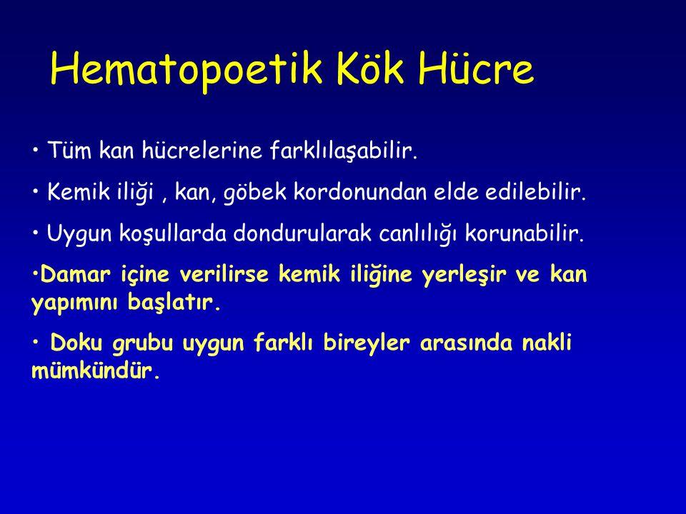 Hematopoetik Kök Hücre