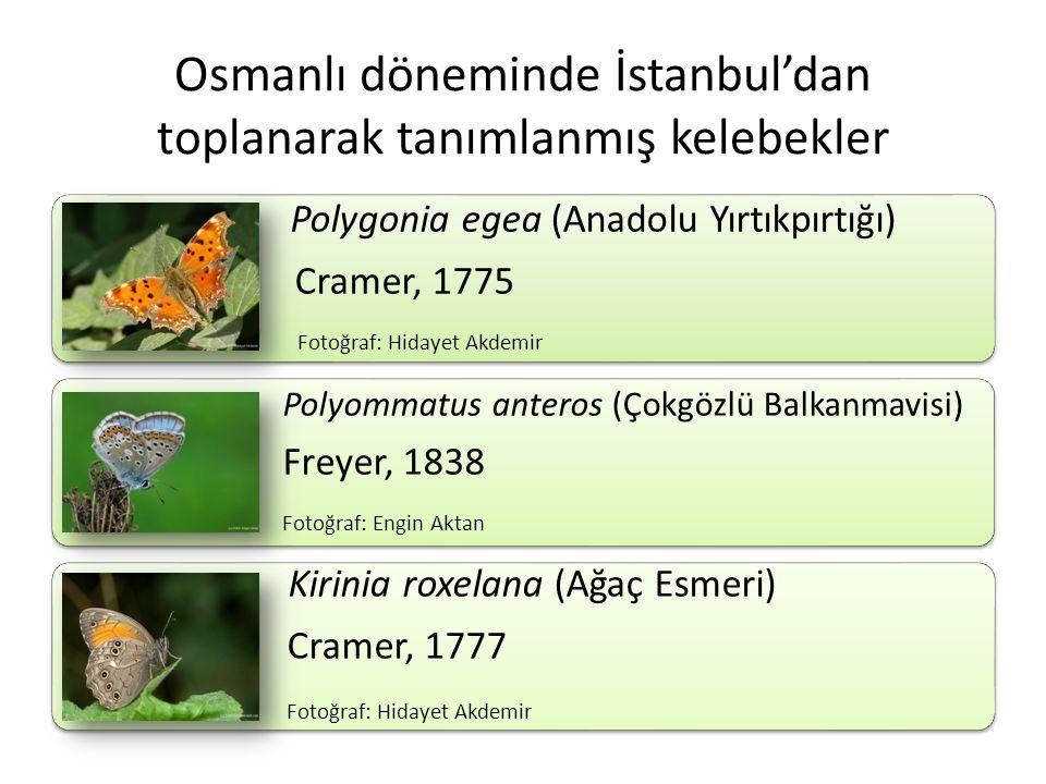 Osmanlı döneminde İstanbul'dan toplanarak tanımlanmış kelebekler