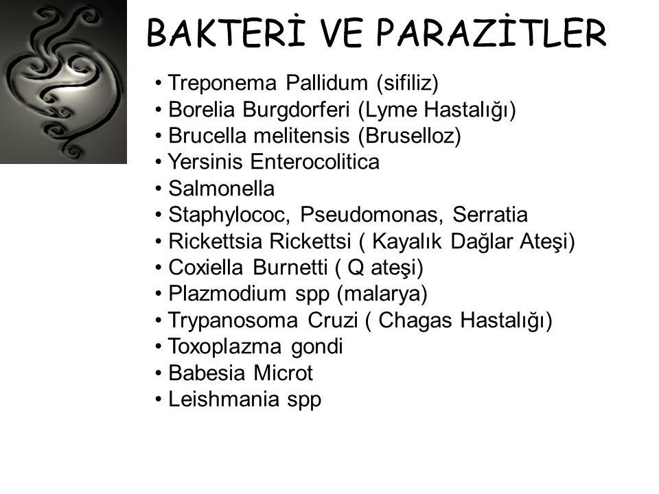 BAKTERİ VE PARAZİTLER Treponema Pallidum (sifiliz)