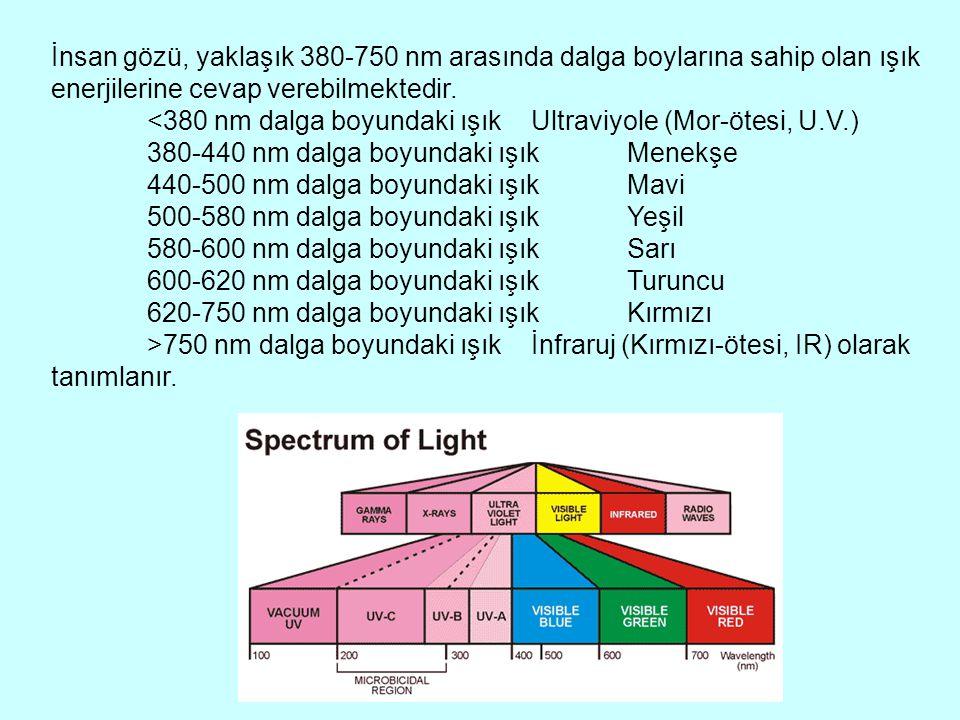 İnsan gözü, yaklaşık 380-750 nm arasında dalga boylarına sahip olan ışık enerjilerine cevap verebilmektedir.
