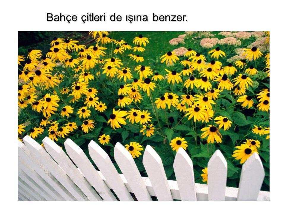 Bahçe çitleri de ışına benzer.