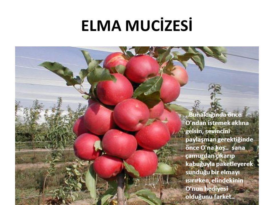 ELMA MUCİZESİ