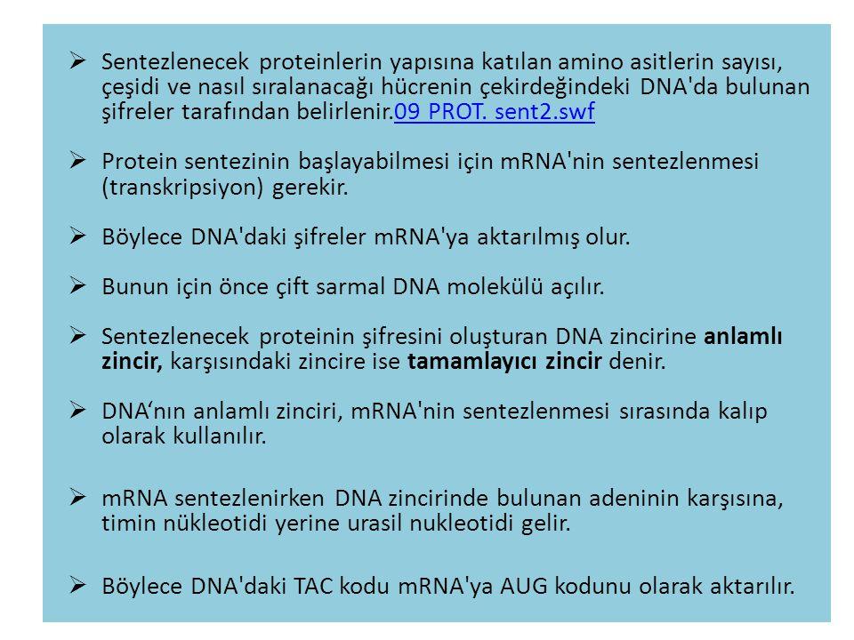 Sentezlenecek proteinlerin yapısına katılan amino asitlerin sayısı, çeşidi ve nasıl sıralanacağı hücrenin çekirdeğindeki DNA da bulunan şifreler tarafından belirlenir.09 PROT. sent2.swf