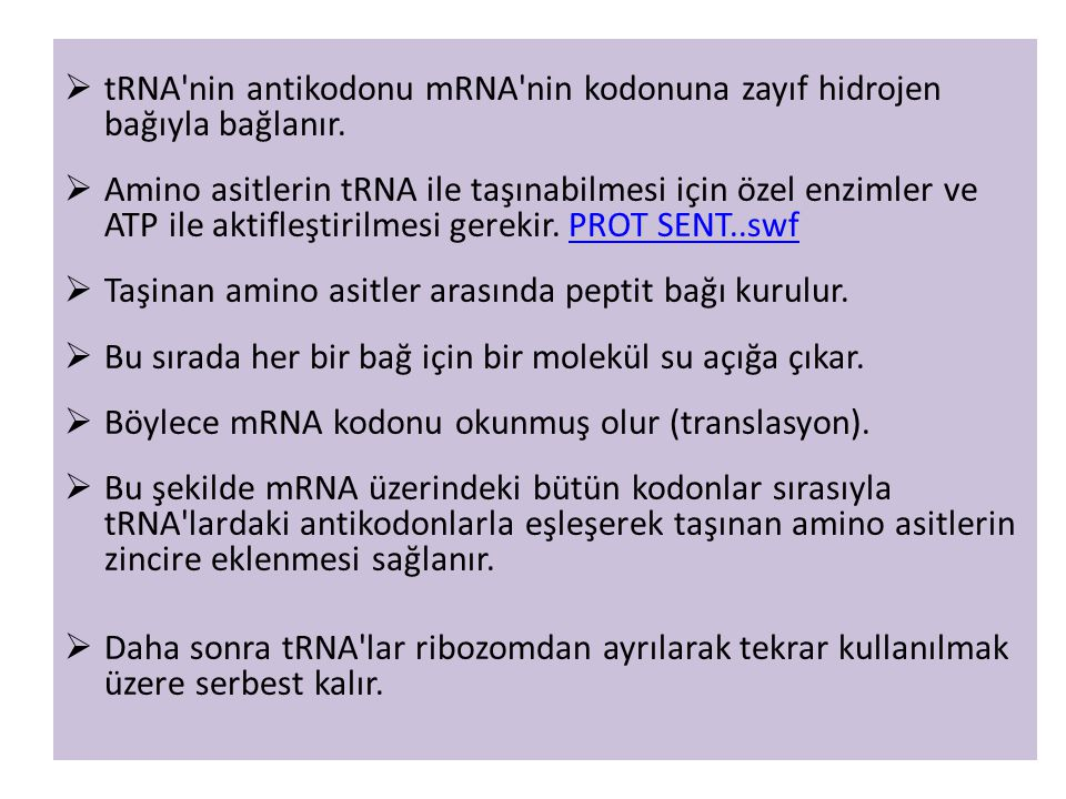 tRNA nin antikodonu mRNA nin kodonuna zayıf hidrojen bağıyla bağlanır.