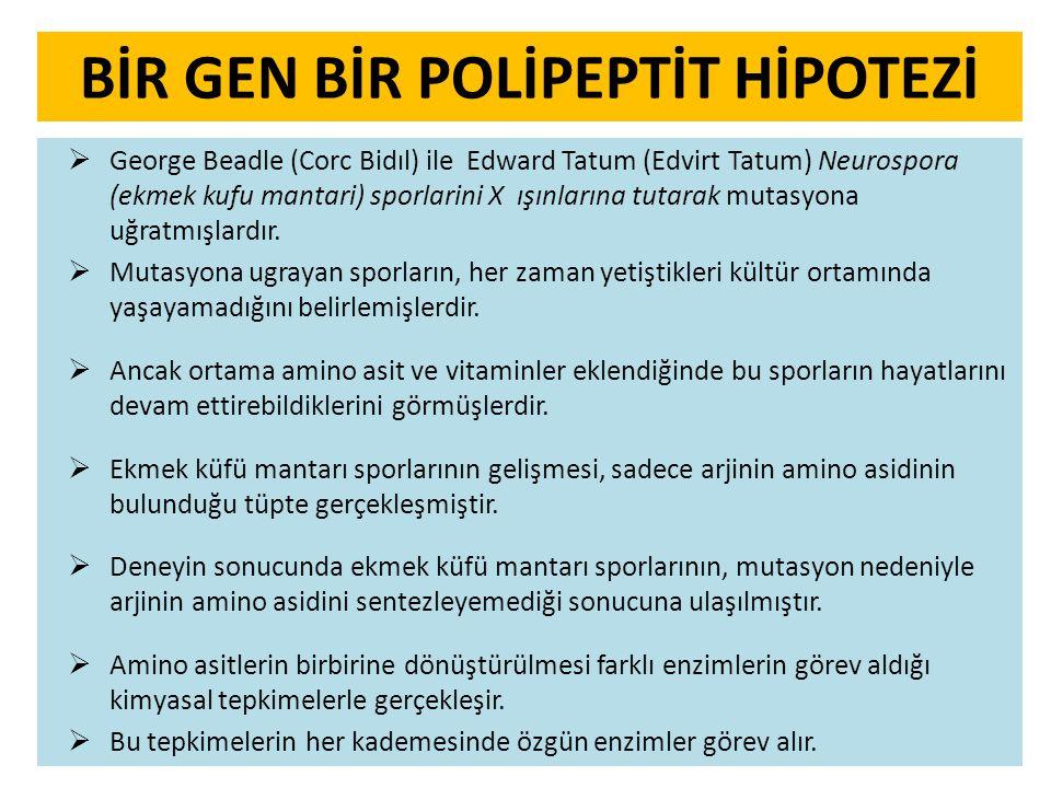 BİR GEN BİR POLİPEPTİT HİPOTEZİ