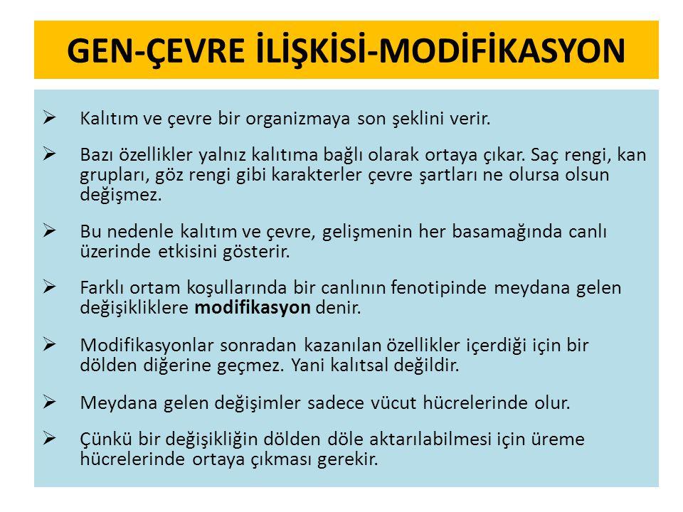 GEN-ÇEVRE İLİŞKİSİ-MODİFİKASYON