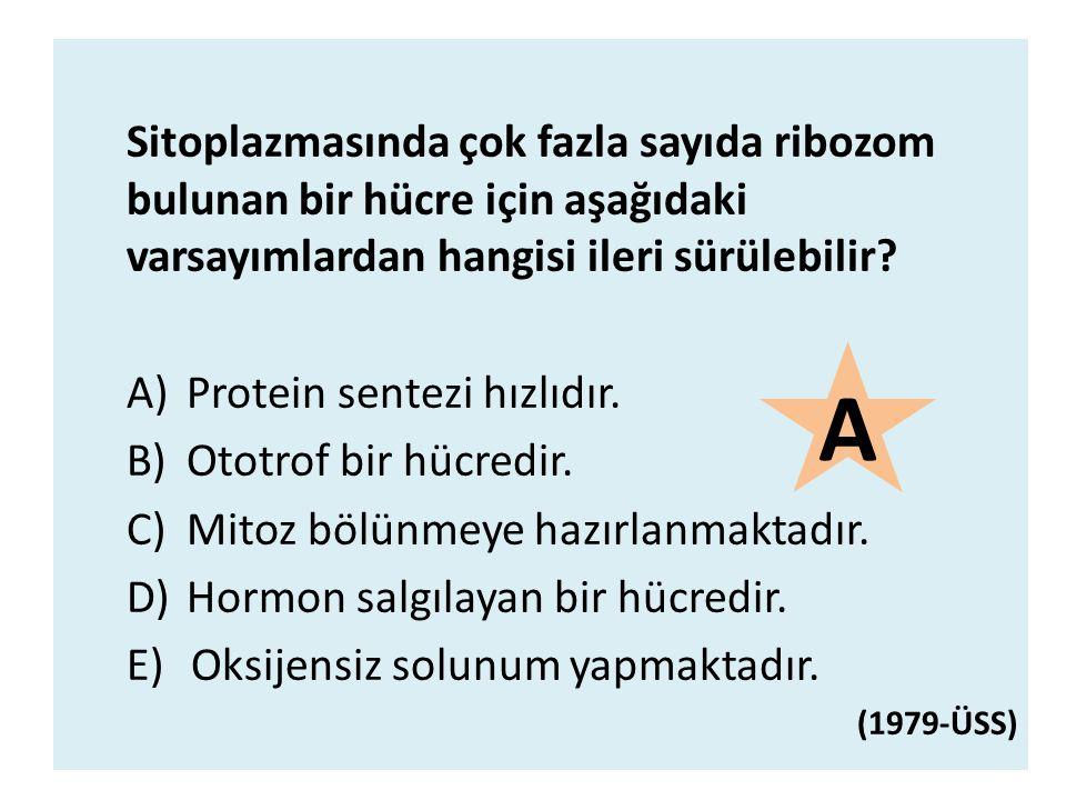 Sitoplazmasında çok fazla sayıda ribozom bulunan bir hücre için aşağıdaki varsayımlardan hangisi ileri sürülebilir