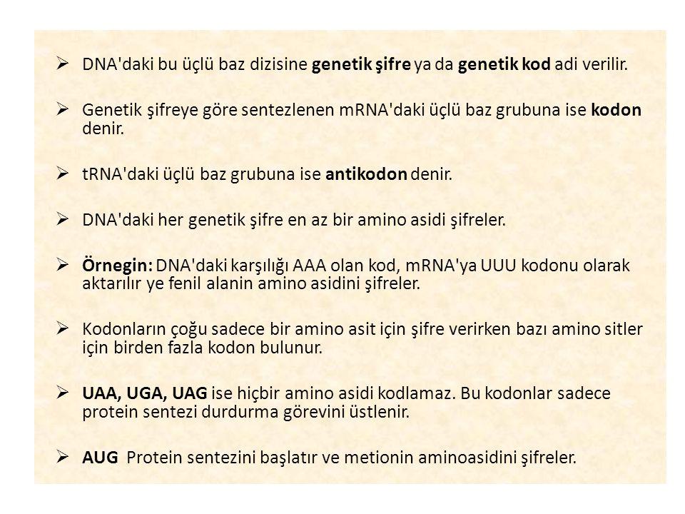 DNA daki bu üçlü baz dizisine genetik şifre ya da genetik kod adi verilir.