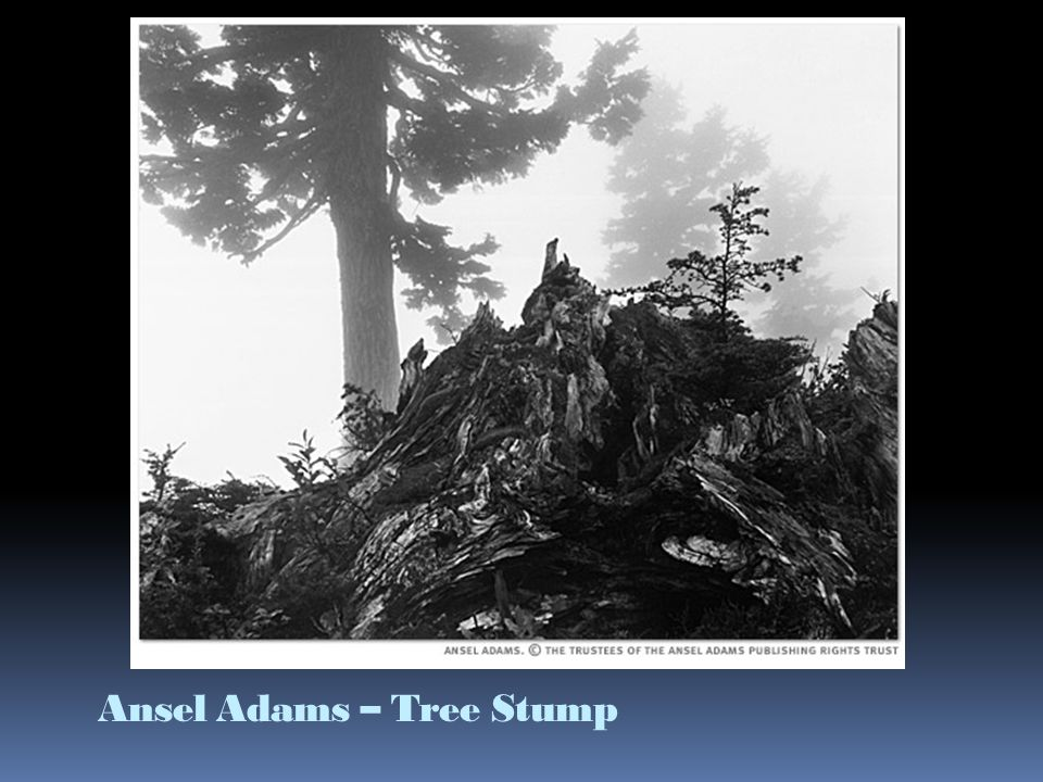 Ansel Adams – Tree Stump