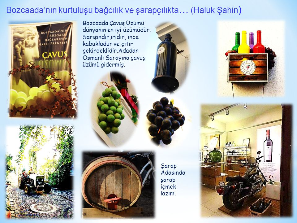 Bozcaada'nın kurtuluşu bağcılık ve şarapçılıkta… (Haluk Şahin)