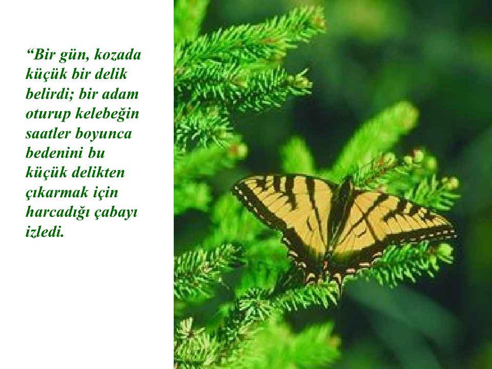 Bir gün, kozada küçük bir delik belirdi; bir adam oturup kelebeğin saatler boyunca bedenini bu küçük delikten çıkarmak için harcadığı çabayı izledi.