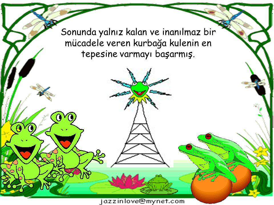 Sonunda yalnız kalan ve inanılmaz bir mücadele veren kurbağa kulenin en tepesine varmayı başarmış.