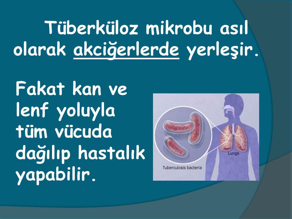 Tüberküloz mikrobu asıl olarak akciğerlerde yerleşir.
