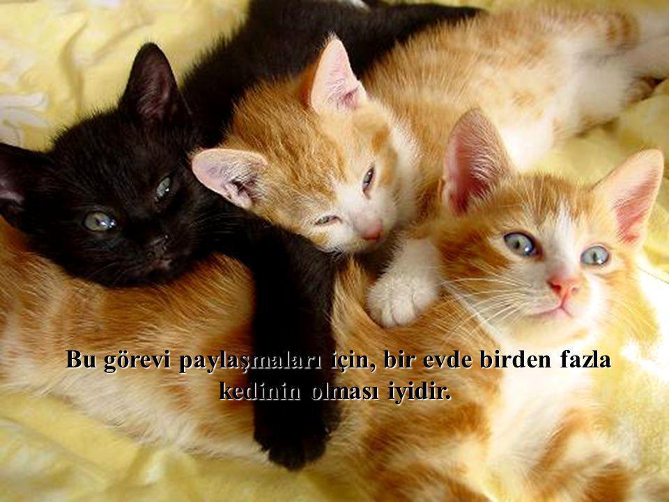 Bu görevi paylaşmaları için, bir evde birden fazla kedinin olması iyidir.