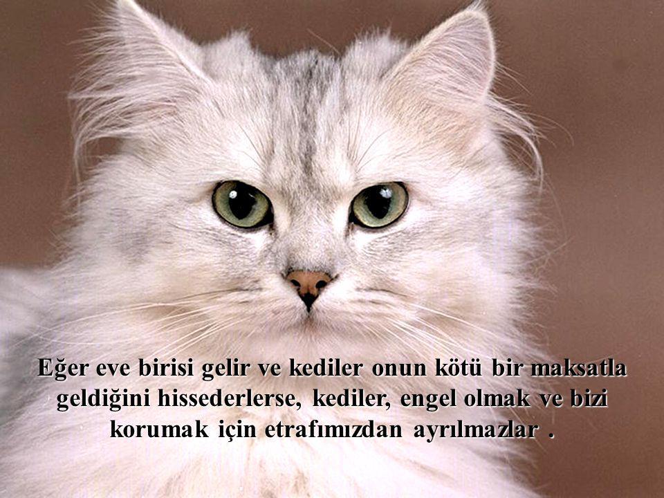 Eğer eve birisi gelir ve kediler onun kötü bir maksatla geldiğini hissederlerse, kediler, engel olmak ve bizi korumak için etrafımızdan ayrılmazlar .