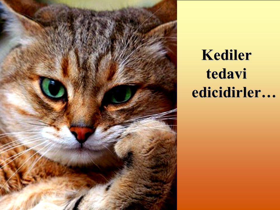 Kediler tedavi edicidirler…