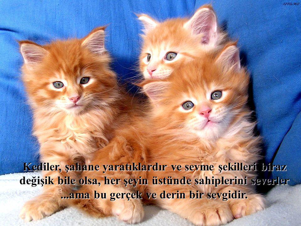 Kediler, şahane yaratıklardır ve sevme şekilleri biraz değişik bile olsa, her şeyin üstünde sahiplerini severler ...ama bu gerçek ve derin bir sevgidir.