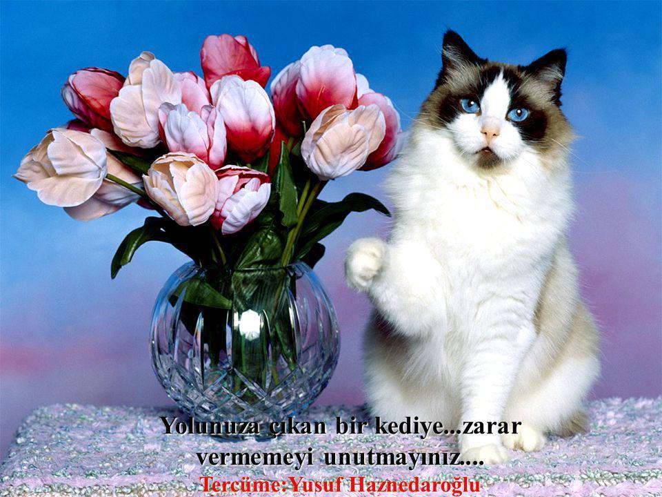 Yolunuza çıkan bir kediye. zarar vermemeyi unutmayınız