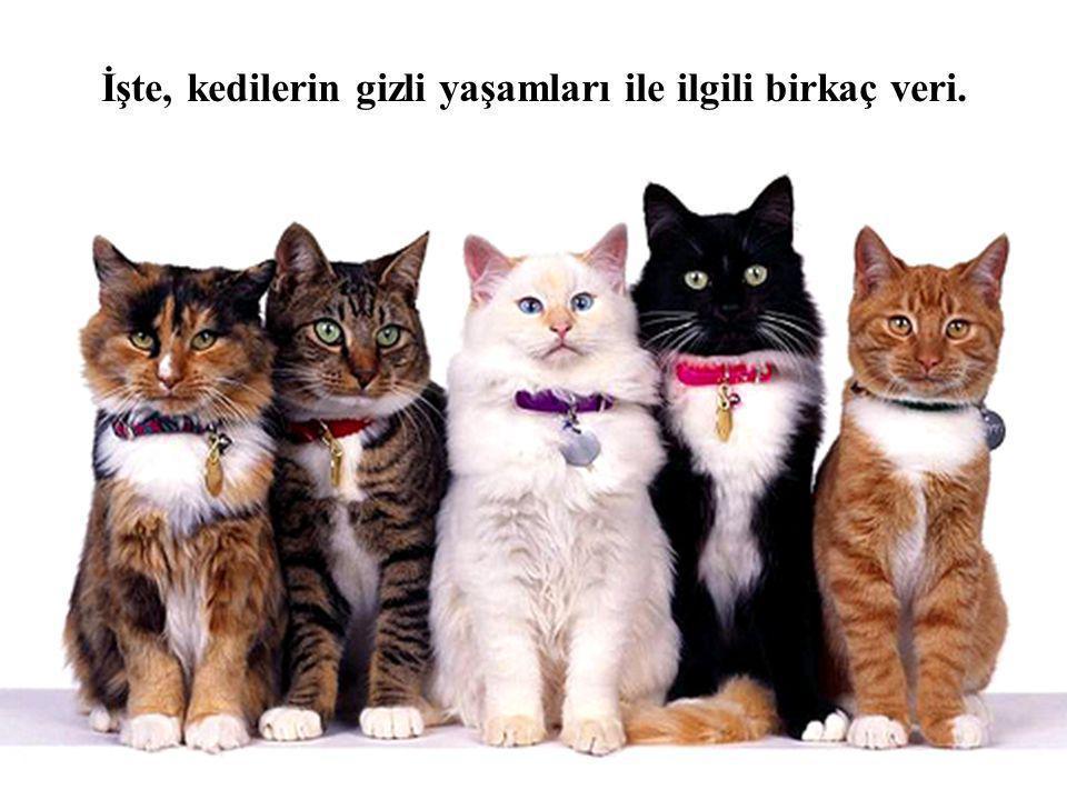İşte, kedilerin gizli yaşamları ile ilgili birkaç veri.