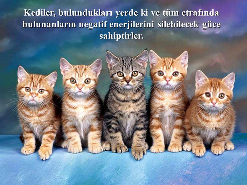 Kediler, bulundukları yerde ki ve tüm etrafında bulunanların negatif enerjilerini silebilecek güce sahiptirler.
