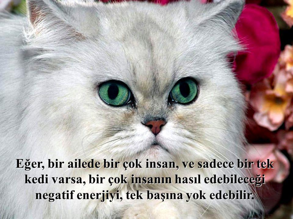 Eğer, bir ailede bir çok insan, ve sadece bir tek kedi varsa, bir çok insanın hasıl edebileceği negatif enerjiyi, tek başına yok edebilir.