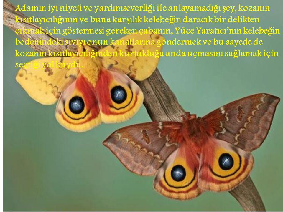 Adamın iyi niyeti ve yardımseverliği ile anlayamadığı şey, kozanın kısıtlayıcılığının ve buna karşılık kelebeğin daracık bir delikten çıkmak için göstermesi gereken çabanın, Yüce Yaratıcı'nın kelebeğin bedenindeki sıvıyı onun kanatlarına göndermek ve bu sayede de kozanın kısıtlayıcılığından kurtulduğu anda uçmasını sağlamak için seçtiği yol buydu.