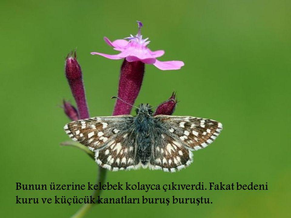 Bunun üzerine kelebek kolayca çıkıverdi
