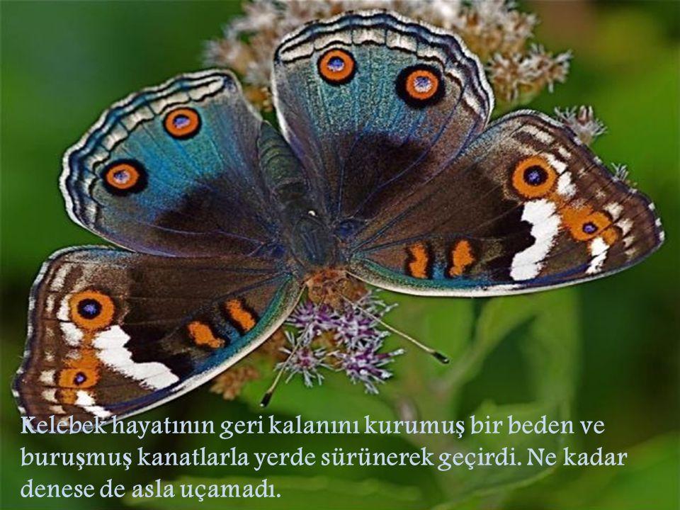 Kelebek hayatının geri kalanını kurumuş bir beden ve buruşmuş kanatlarla yerde sürünerek geçirdi.