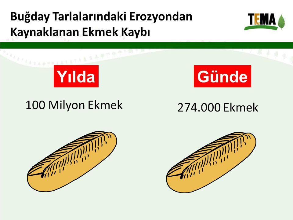 Yılda Günde Buğday Tarlalarındaki Erozyondan Kaynaklanan Ekmek Kaybı