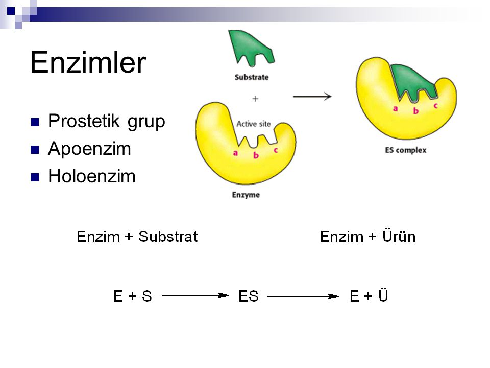 Enzimler Prostetik grup Apoenzim Holoenzim