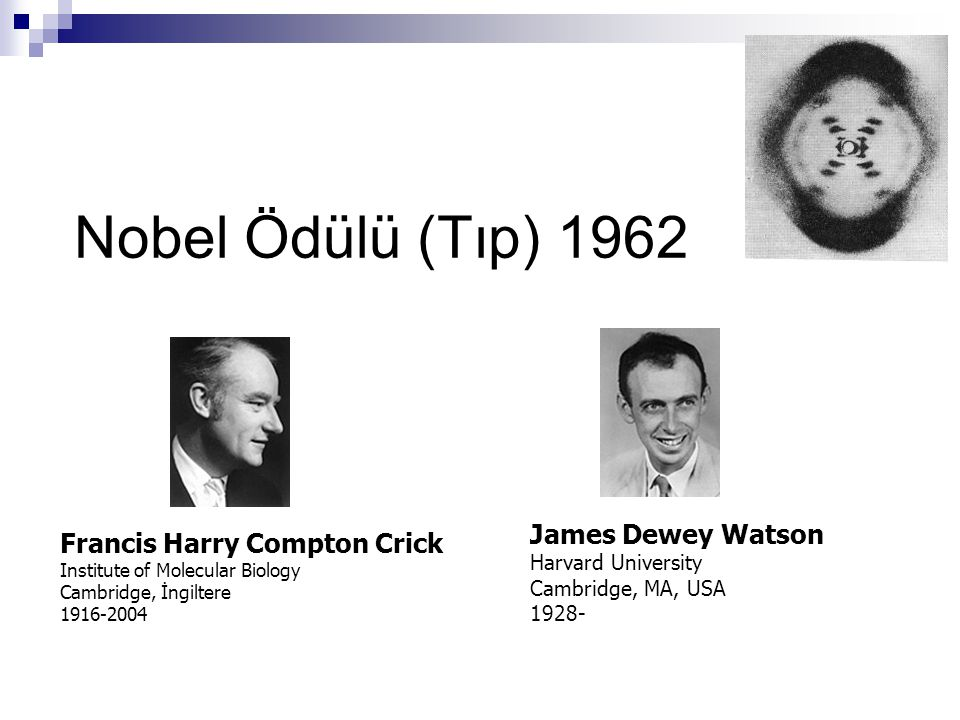 Nobel Ödülü (Tıp) 1962 James Dewey Watson Francis Harry Compton Crick