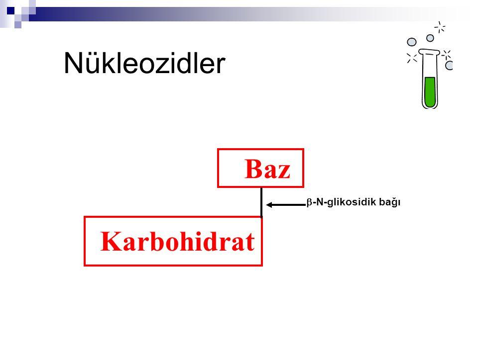 Nükleozidler Baz b-N-glikosidik bağı Karbohidrat