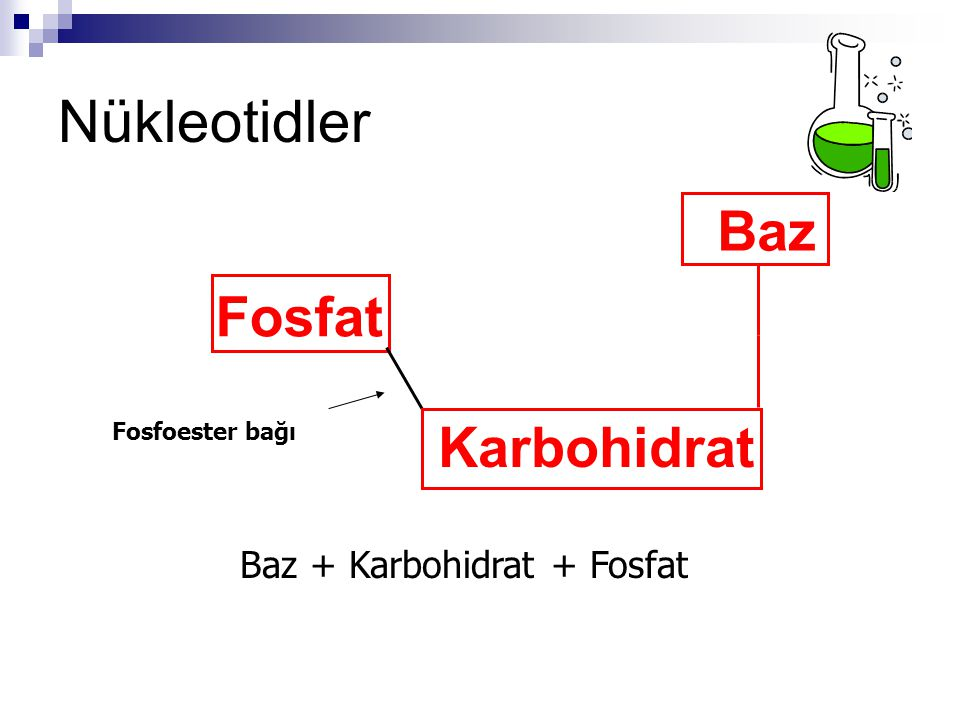 Baz + Karbohidrat + Fosfat