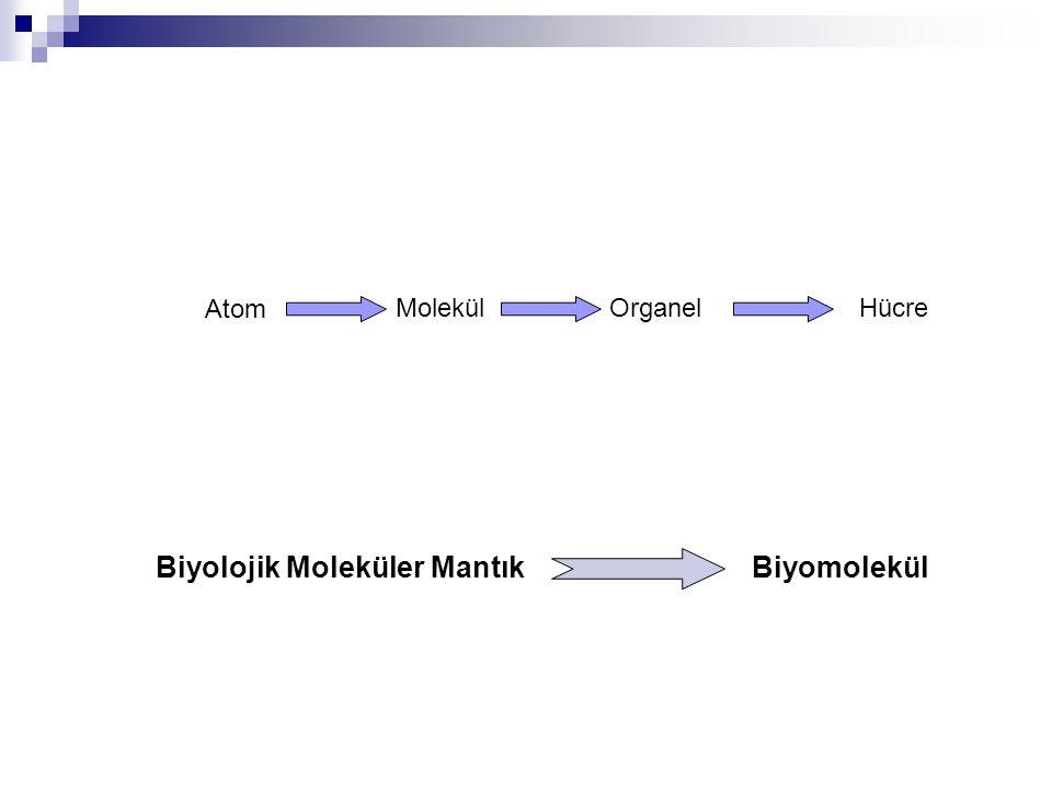 Biyolojik Moleküler Mantık Biyomolekül