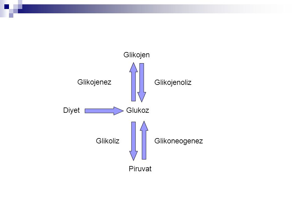 Glikojen Glikojenez Glikojenoliz Diyet Glukoz Glikoliz Glikoneogenez Piruvat