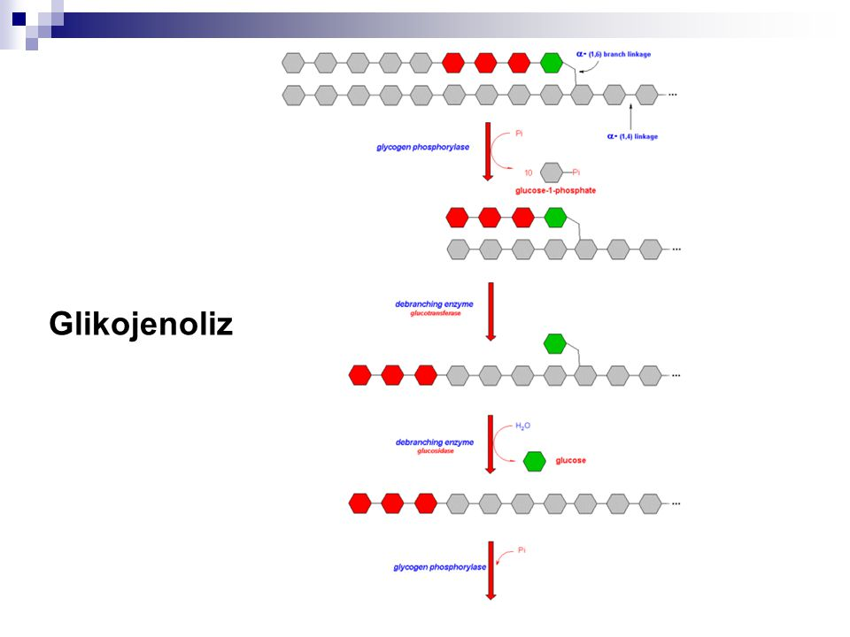 Glikojenoliz