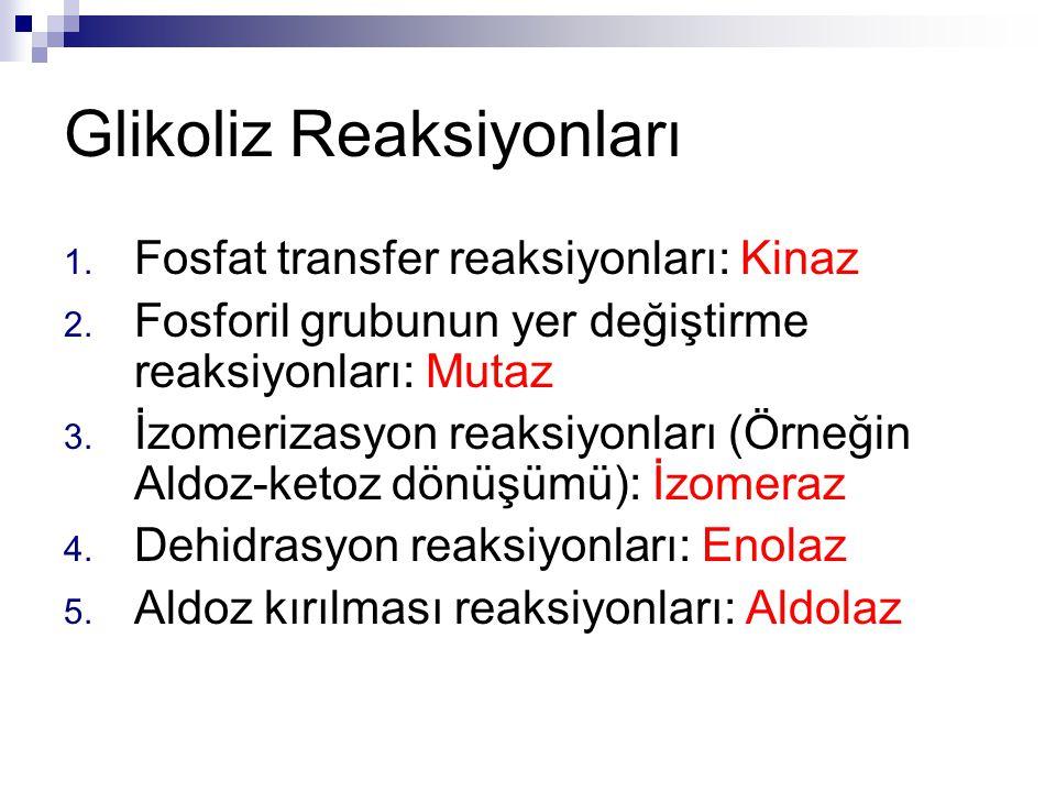 Glikoliz Reaksiyonları