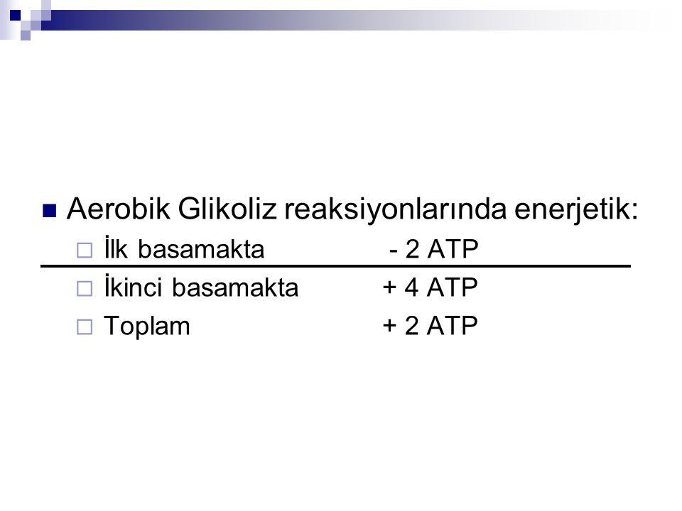 Aerobik Glikoliz reaksiyonlarında enerjetik: