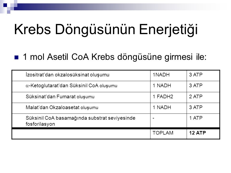Krebs Döngüsünün Enerjetiği