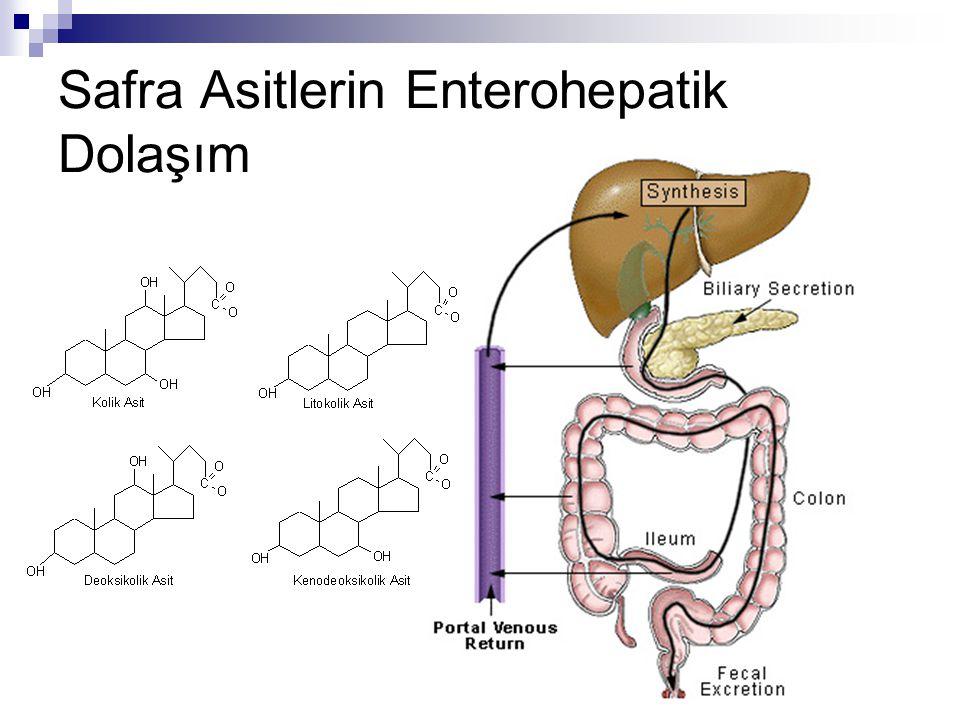 Safra Asitlerin Enterohepatik Dolaşım