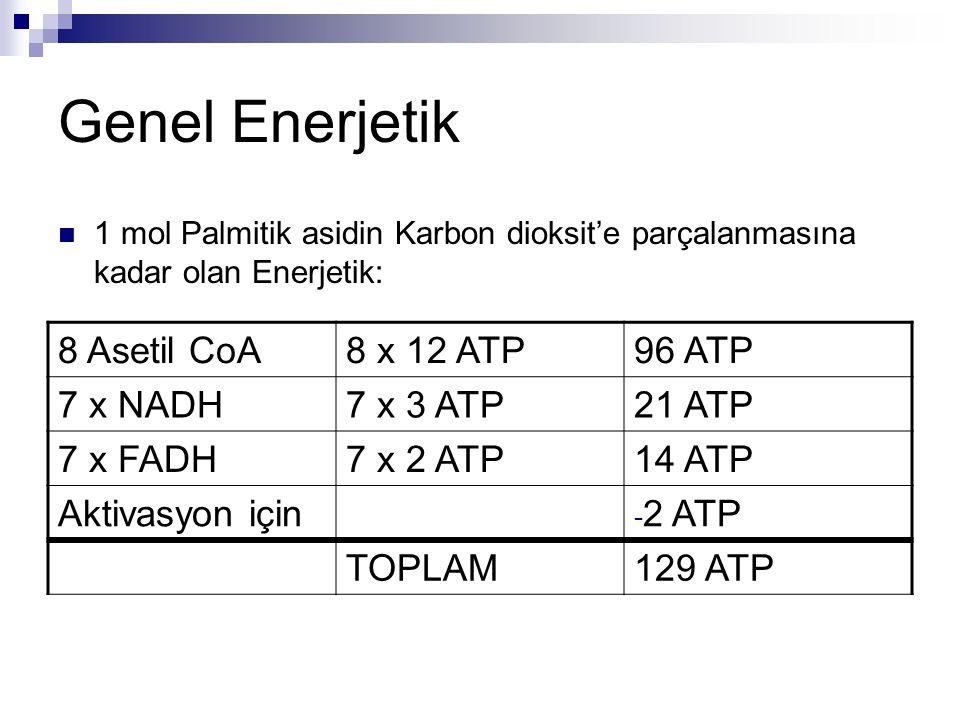 Genel Enerjetik 8 Asetil CoA 8 x 12 ATP 96 ATP 7 x NADH 7 x 3 ATP