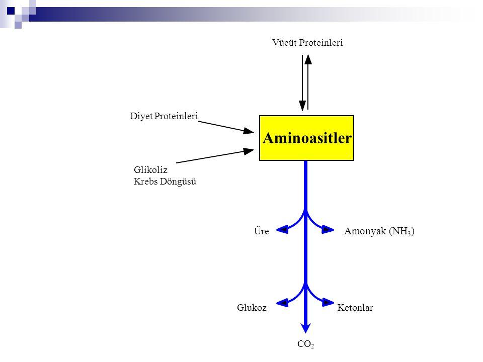Aminoasitler Amonyak (NH3) Vücüt Proteinleri Diyet Proteinleri