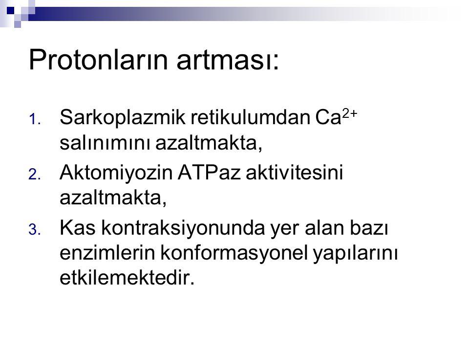 Protonların artması: Sarkoplazmik retikulumdan Ca2+ salınımını azaltmakta, Aktomiyozin ATPaz aktivitesini azaltmakta,