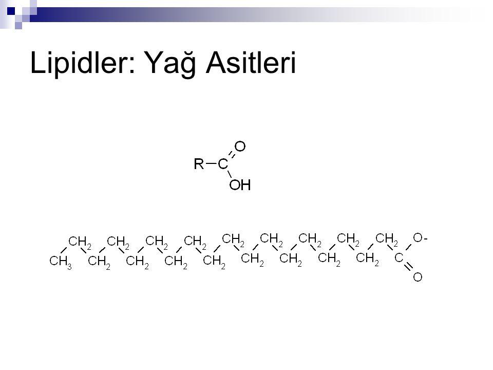 Lipidler: Yağ Asitleri