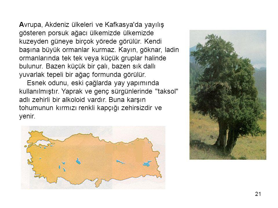 Avrupa, Akdeniz ülkeleri ve Kafkasya da yayılış gösteren porsuk ağacı ülkemizde ülkemizde kuzeyden güneye birçok yörede görülür.